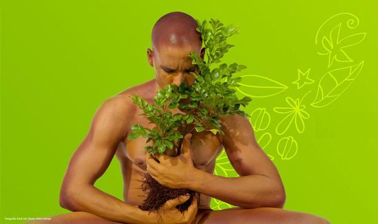 foto planta